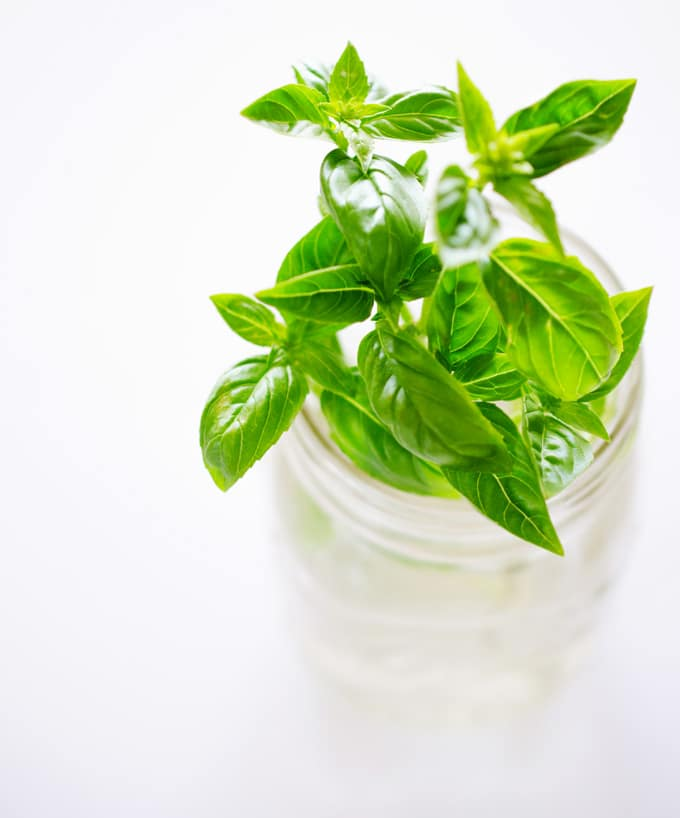 How to grow fresh basil