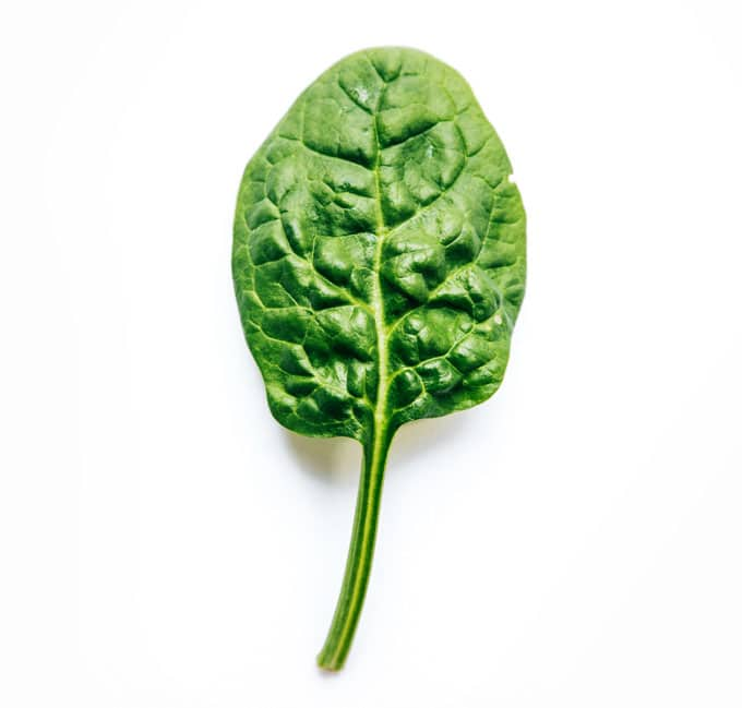 Spinach leaf on a white background