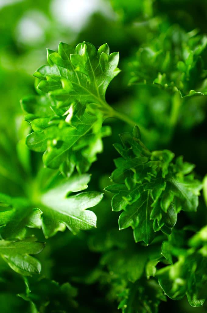 Closeup photo of parsley