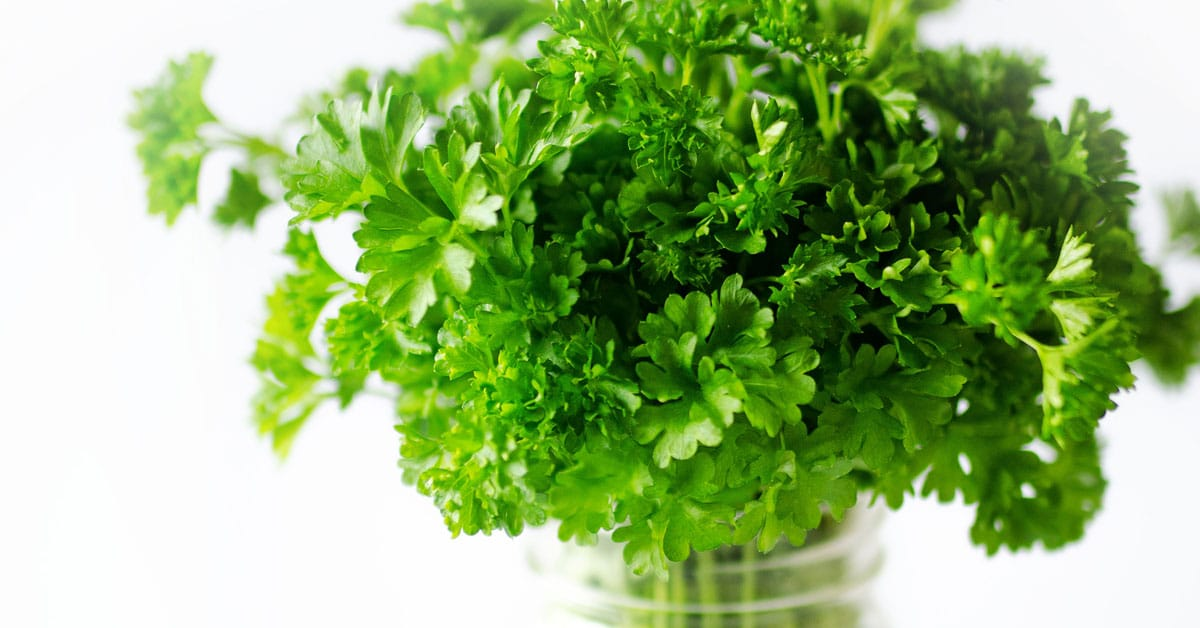 how to store parsley this hack will keep your herbs fresh for weeks