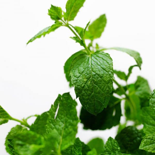 Have more fresh mint on your hands that you don't know what to do with? Here are 7 tasty culinary ways to use fresh mint!