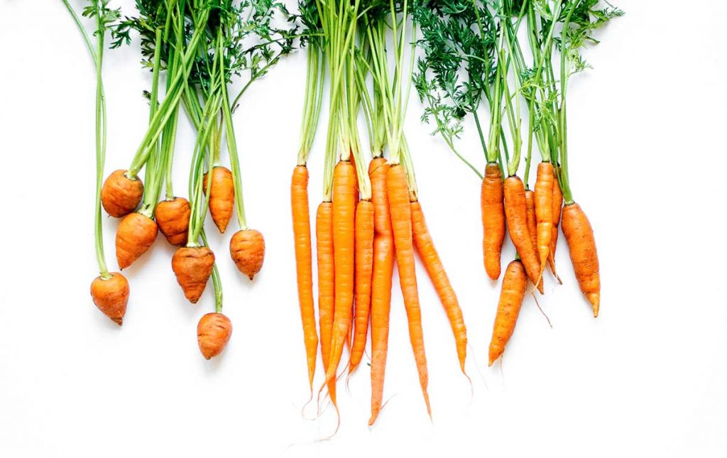 Different varieties of carrots on a white background