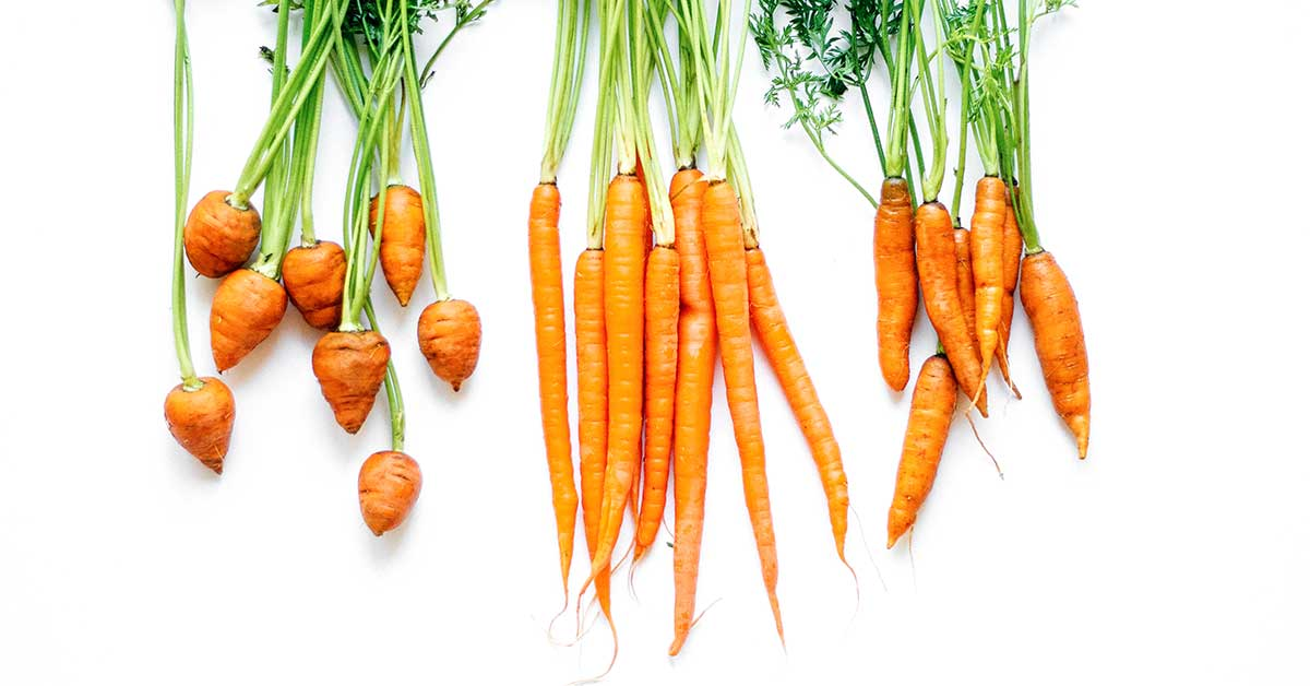 Carrots 101 Everything You Need To Know About Carrots