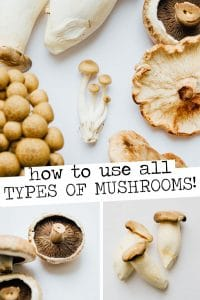 Running through the main types of mushrooms and how to use them to add savory, meaty flavor and texture to your vegetarian cooking!