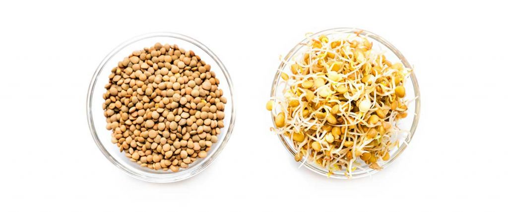 Sprouted lentils in a bowl on a white background