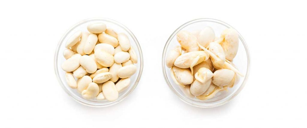 Sprouted beans in a bowl on a white background