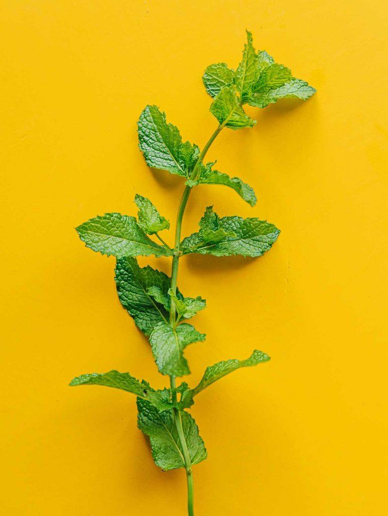Fresh mint on a yellow background