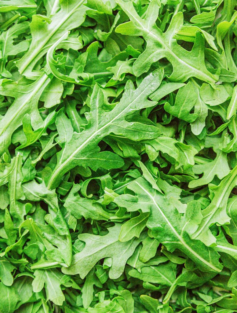 A close up image detailing the texture of arugula