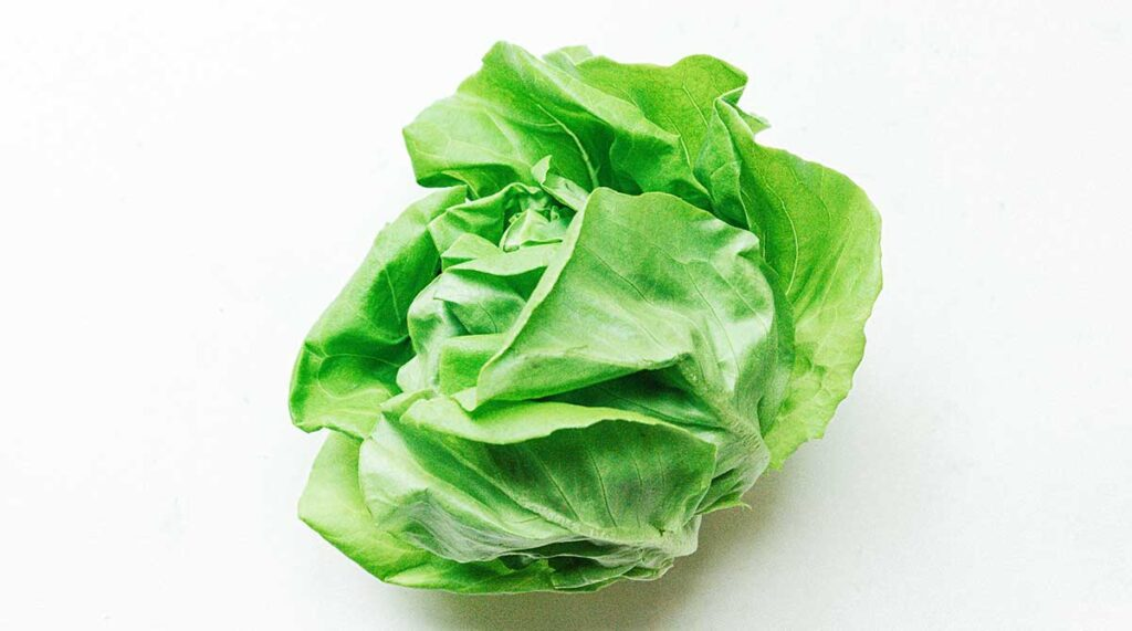A head of green butterhead lettuce on a white background