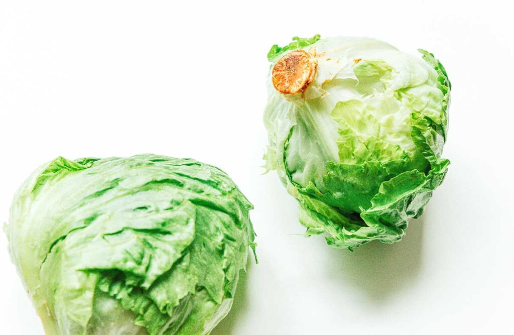 Two heads of iceberg lettuce on a white background