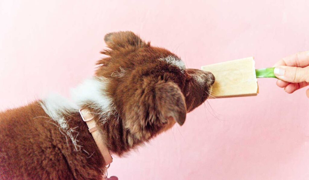 Dog eating dog popsicles with carrot and celery sticks